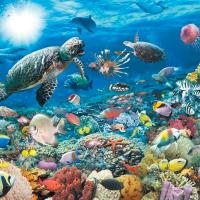 5000 piece Jigsaw Puzzle Ravensburger - Underwater World