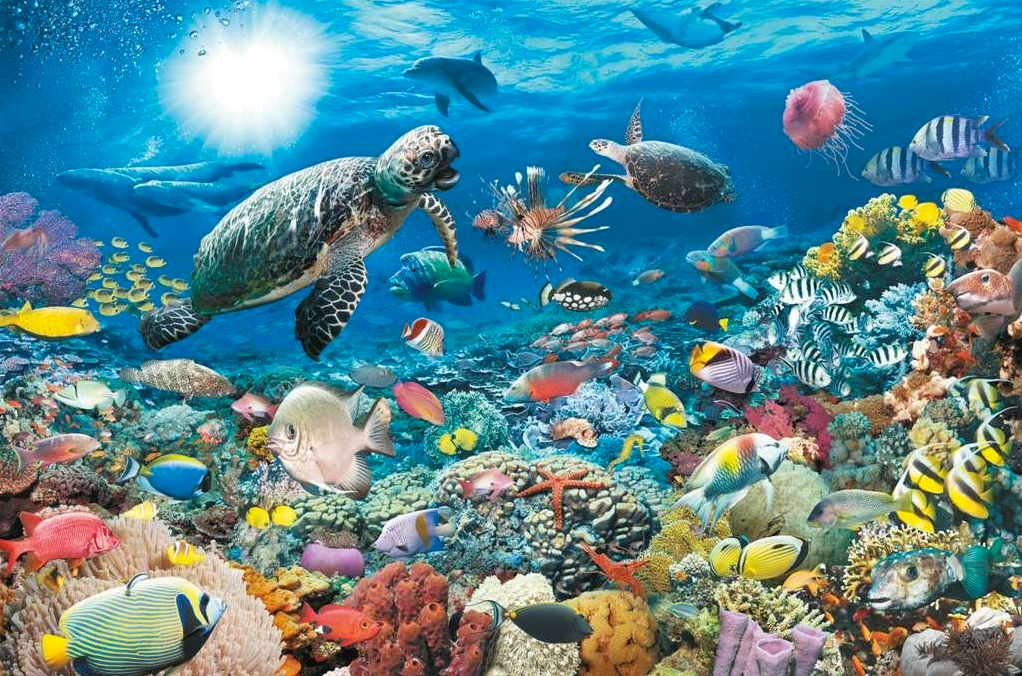Ravensburger World Map Jigsaw Puzzle. 5000 piece Jigsaw Puzzle Ravensburger  Underwater World Extra Large Puzzles GIANT Not For The Faint hearted