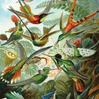 Haeckel Hummingbirds wooden jigsaw puzzle
