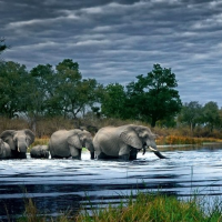 Herd of Elephants - 2000 piece panoramic jigsaw puzzles