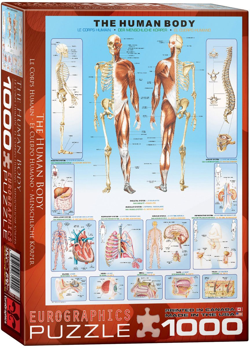 Human Anatomy Puzzles | Educational and Fun Jigsaw Puzzles!