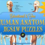 Human Anatomy Puzzles
